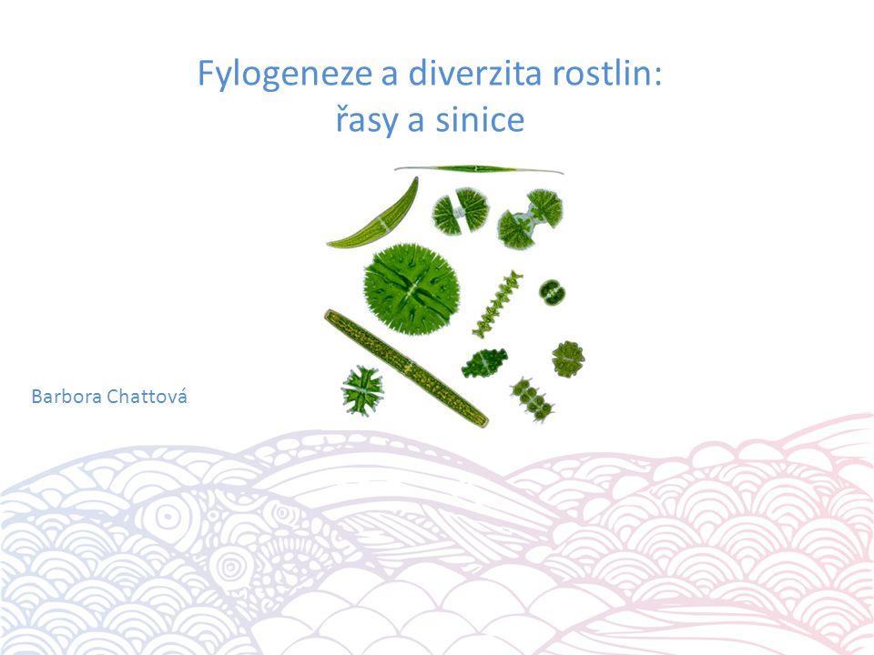Fylogeneze a diverzita rostlin: řasy a sinice