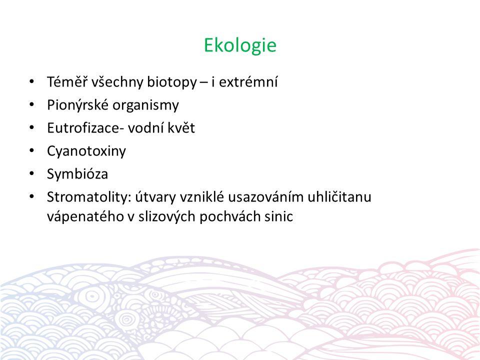 Ekologie Téměř všechny biotopy – i extrémní Pionýrské organismy