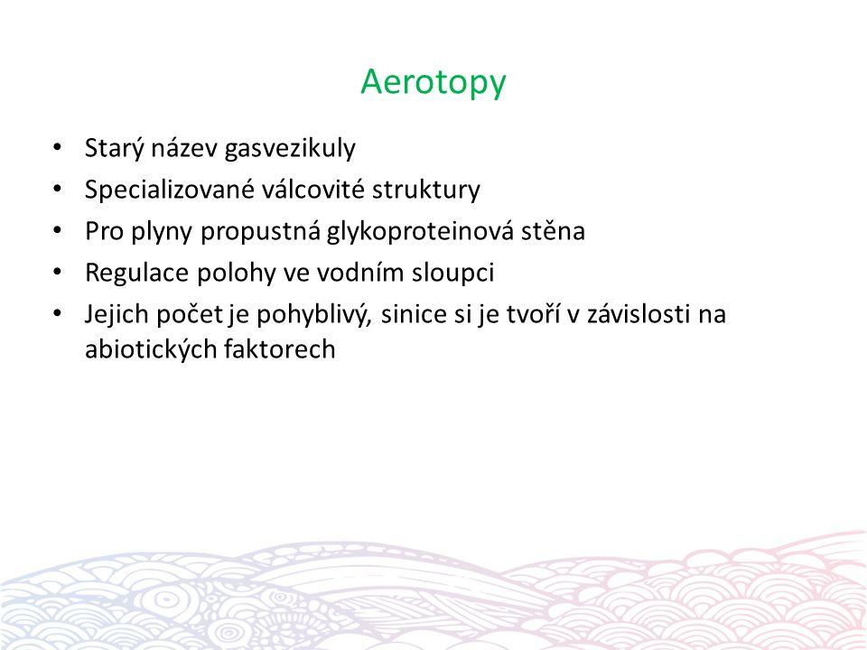 Aerotopy Starý název gasvezikuly Specializované válcovité struktury