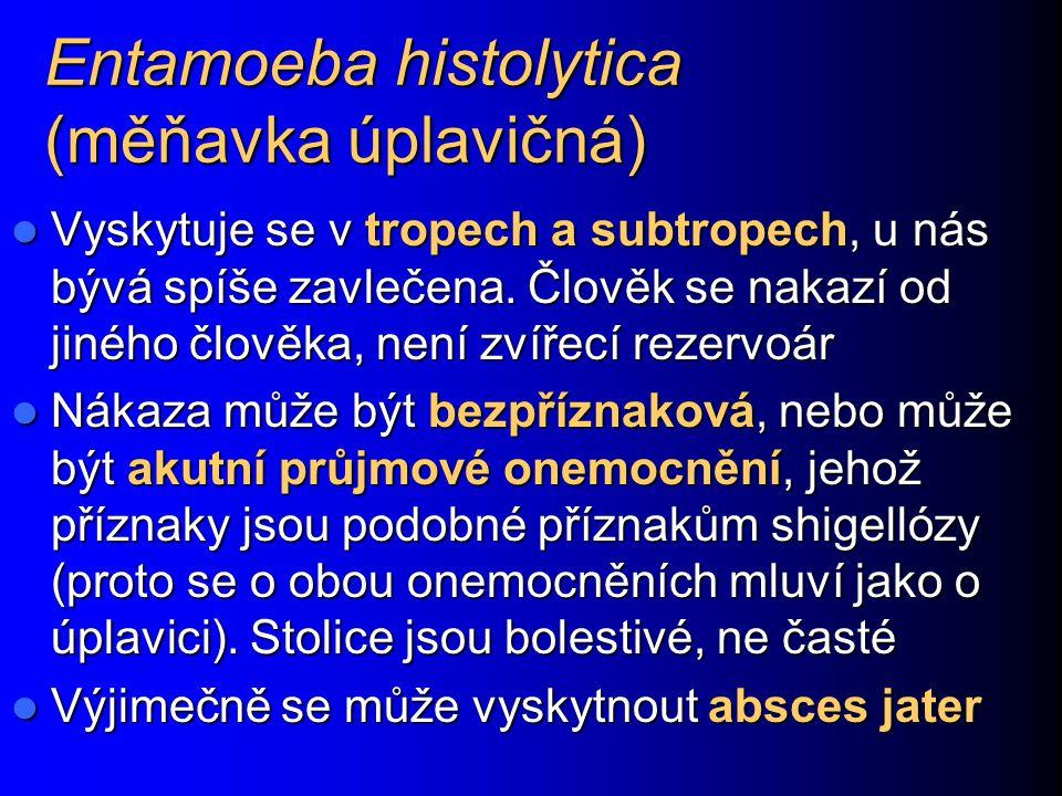 Entamoeba histolytica (měňavka úplavičná)