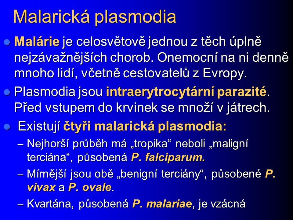 Malarická plasmodia Malárie je celosvětově jednou z těch úplně nejzávažnějších chorob. Onemocní na ni denně mnoho lidí, včetně cestovatelů z Evropy.