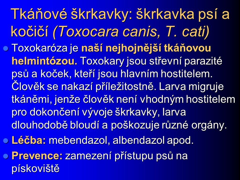 Tkáňové škrkavky: škrkavka psí a kočičí (Toxocara canis, T. cati)