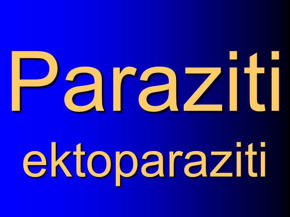 Paraziti ektoparaziti