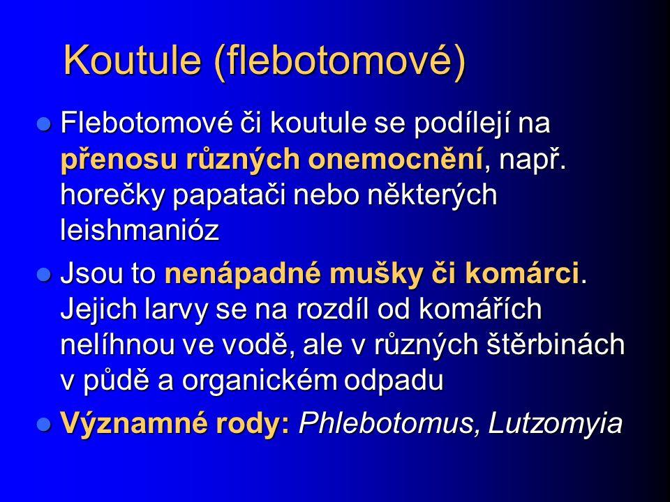 Koutule (flebotomové)