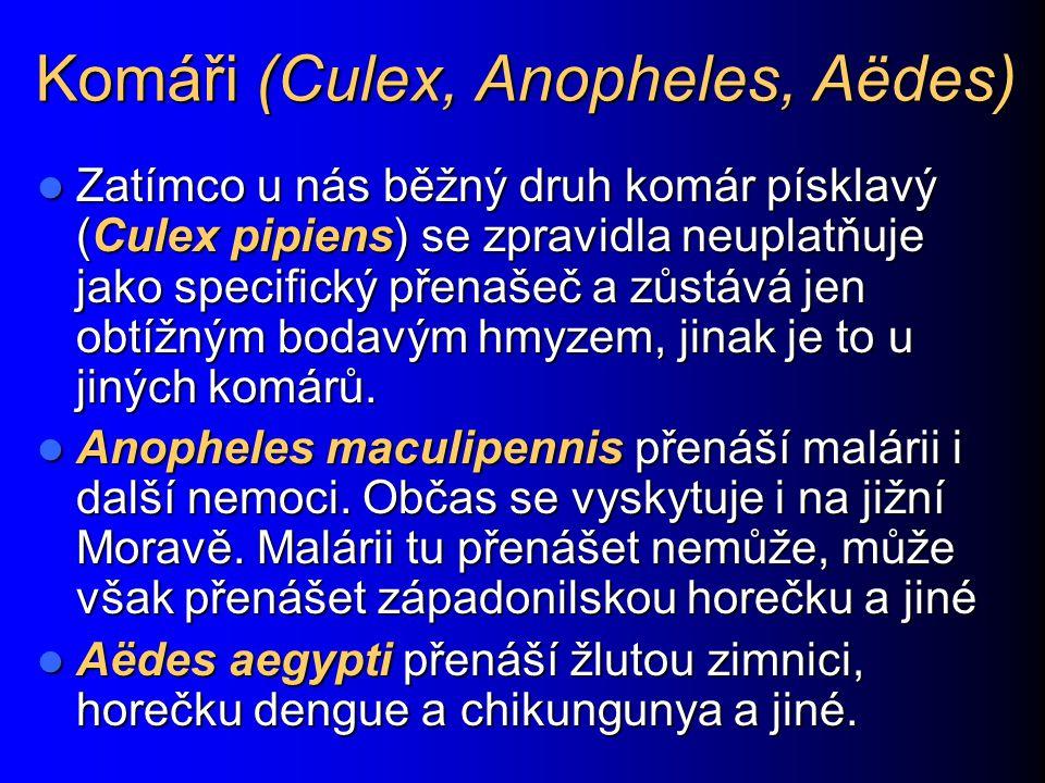 Komáři (Culex, Anopheles, Aëdes)