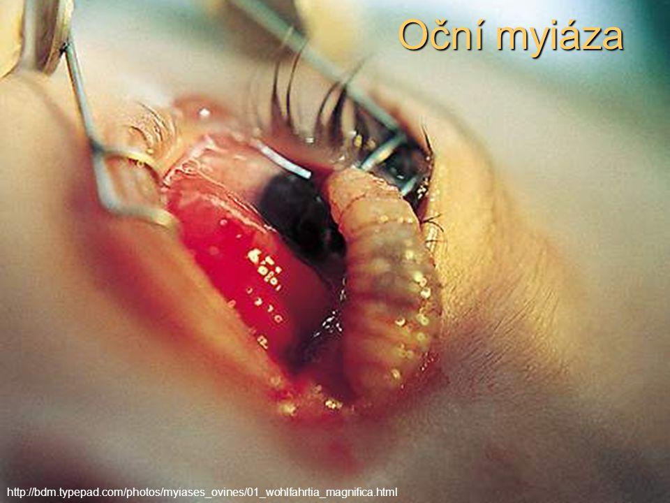 Oční myiáza http://bdm.typepad.com/photos/myiases_ovines/01_wohlfahrtia_magnifica.html