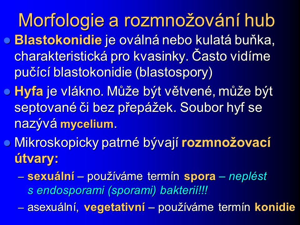 Morfologie a rozmnožování hub