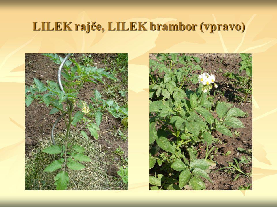LILEK rajče, LILEK brambor (vpravo)