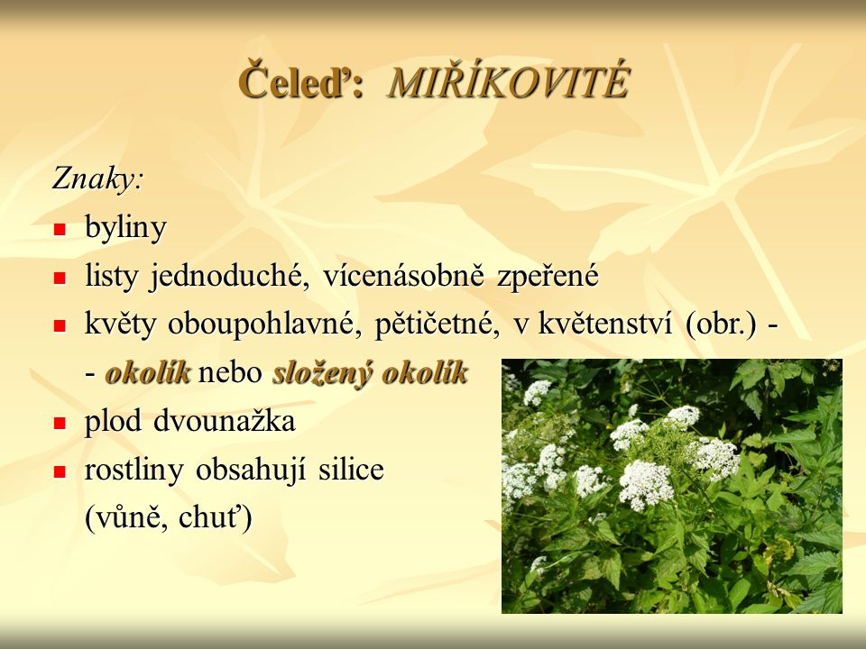 Čeleď: MIŘÍKOVITÉ Znaky: byliny listy jednoduché, vícenásobně zpeřené