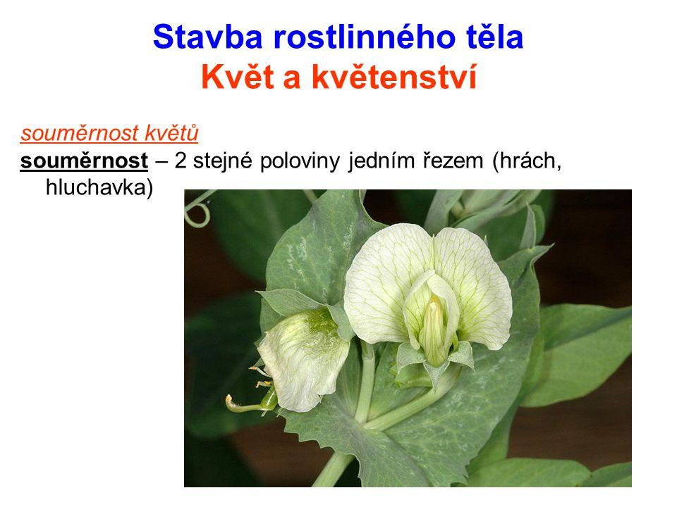 Stavba rostlinného těla Květ a květenství