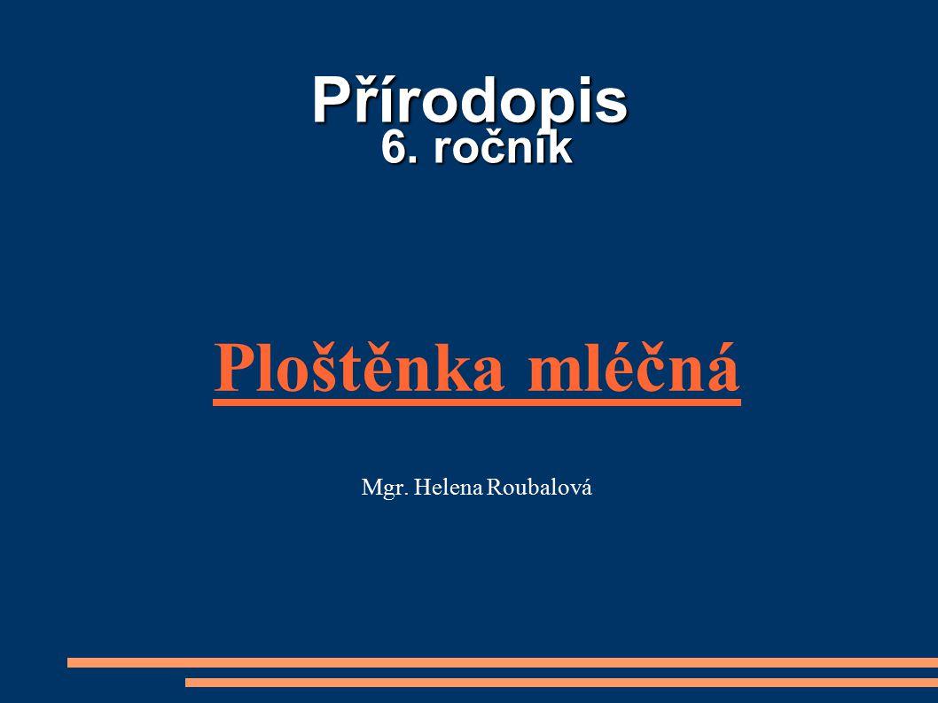 Ploštěnka mléčná Mgr. Helena Roubalová