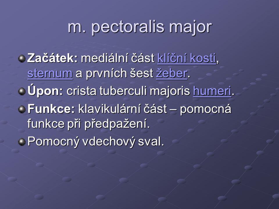 m. pectoralis major Začátek: mediální část klíční kosti, sternum a prvních šest žeber. Úpon: crista tuberculi majoris humeri.