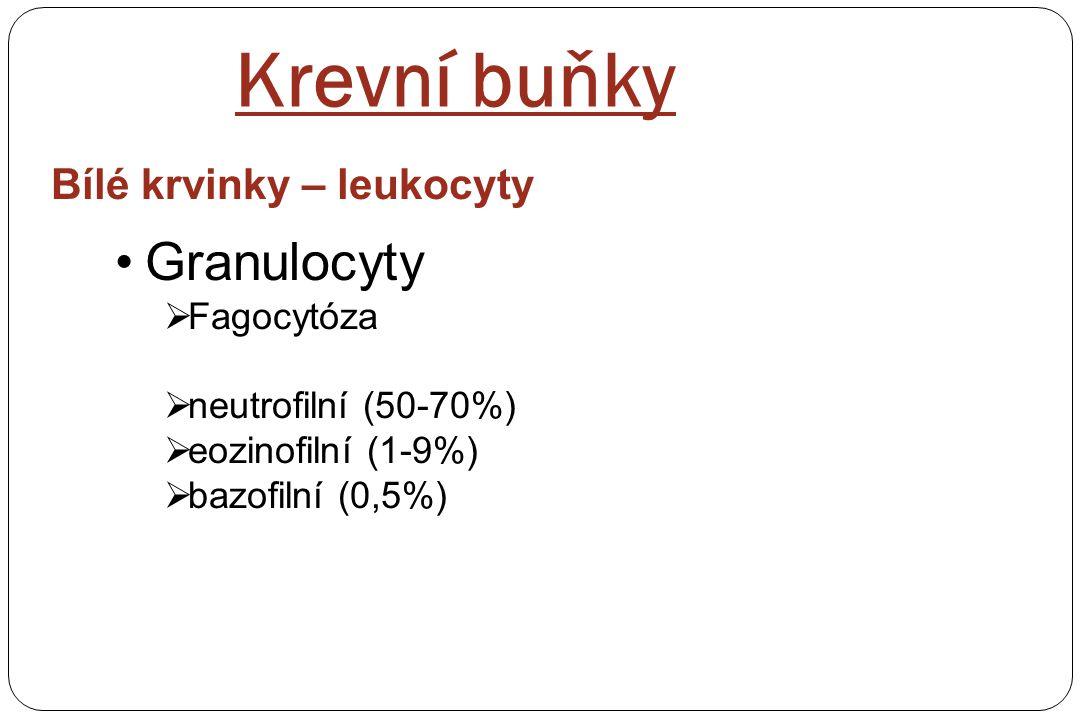 Krevní buňky Granulocyty Rozdělení leukocytů: