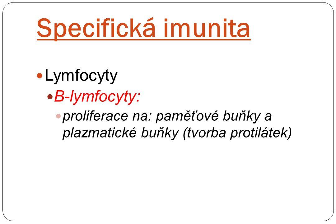 Specifická imunita Lymfocyty B-lymfocyty: