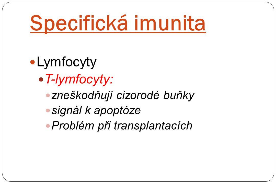 Specifická imunita Lymfocyty T-lymfocyty: zneškodňují cizorodé buňky