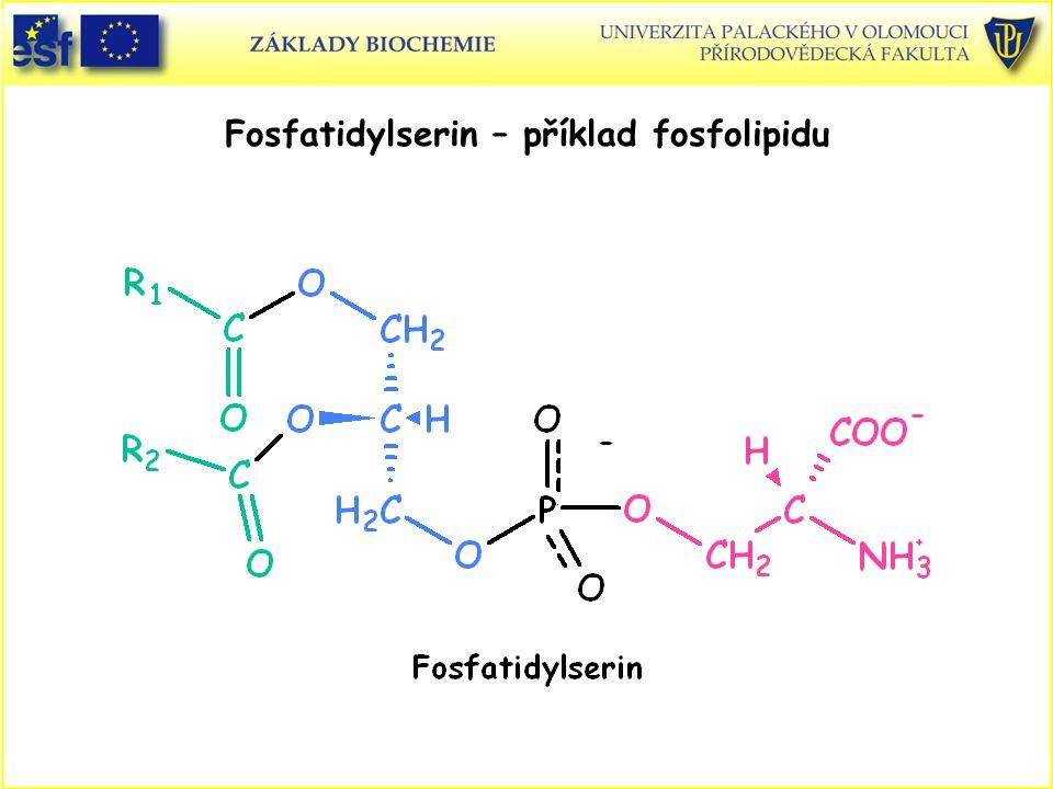 Fosfatidylserin – příklad fosfolipidu