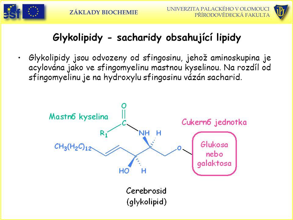 Glykolipidy - sacharidy obsahující lipidy