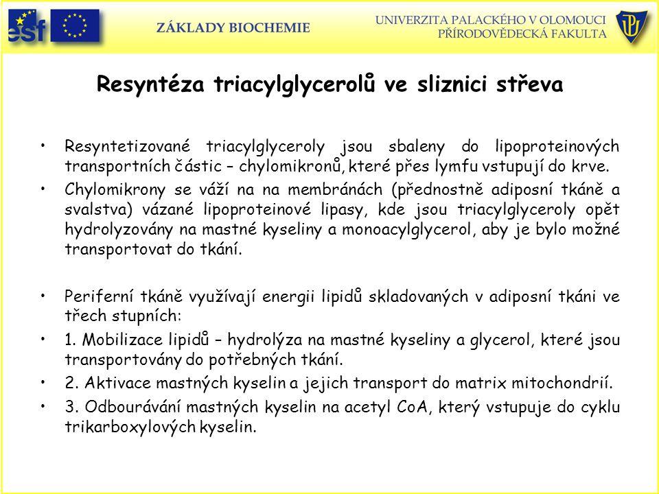 Resyntéza triacylglycerolů ve sliznici střeva
