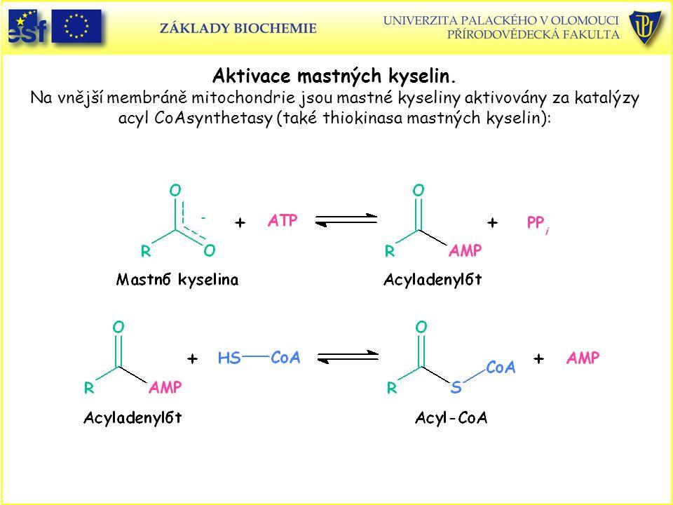 Aktivace mastných kyselin