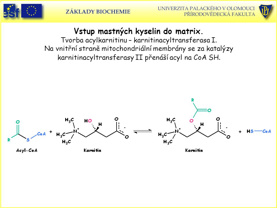 Vstup mastných kyselin do matrix