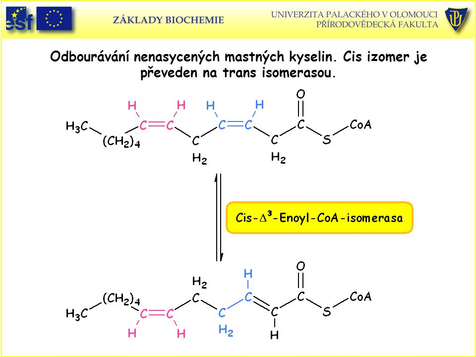 Odbourávání nenasycených mastných kyselin