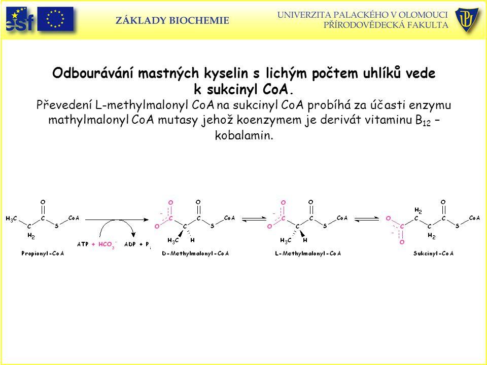 Odbourávání mastných kyselin s lichým počtem uhlíků vede k sukcinyl CoA. Převedení L-methylmalonyl CoA na sukcinyl CoA probíhá za účasti enzymu mathylmalonyl CoA mutasy jehož koenzymem je derivát vitaminu B12 – kobalamin.