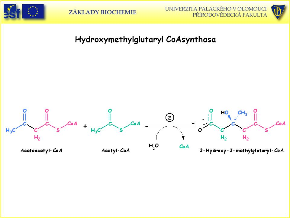 Hydroxymethylglutaryl CoAsynthasa