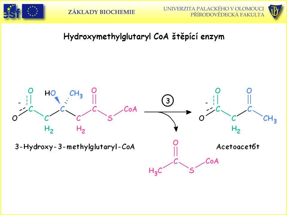 Hydroxymethylglutaryl CoA štěpící enzym
