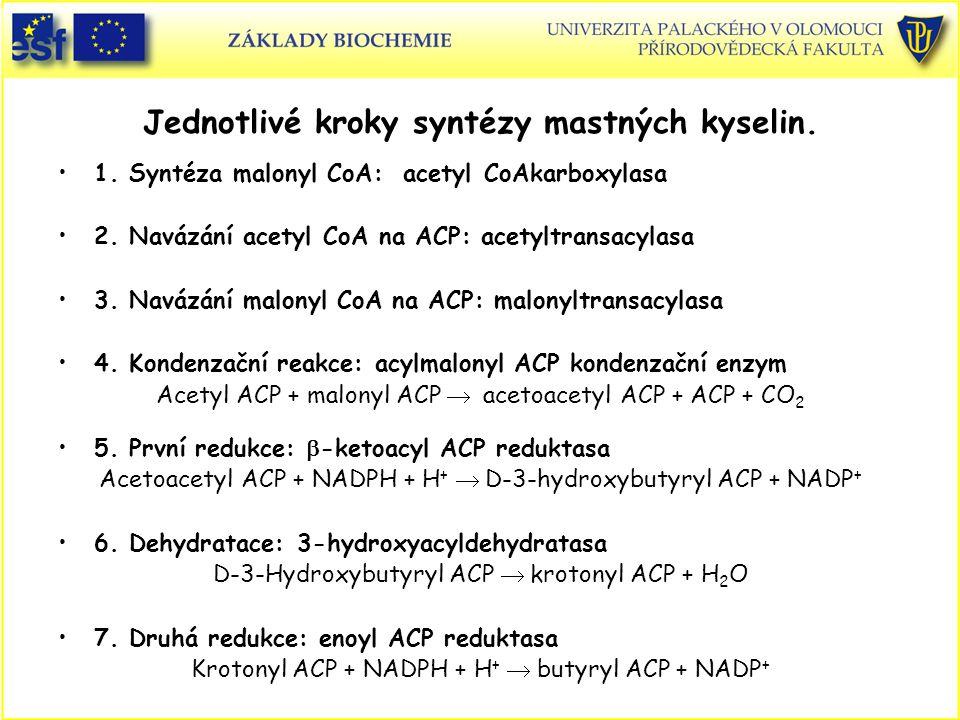 Jednotlivé kroky syntézy mastných kyselin.
