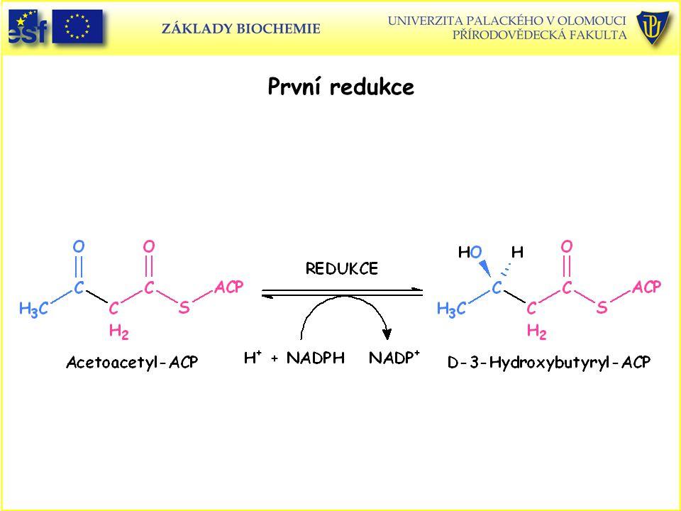 První redukce Syntéza mastných kyselin, první redukce