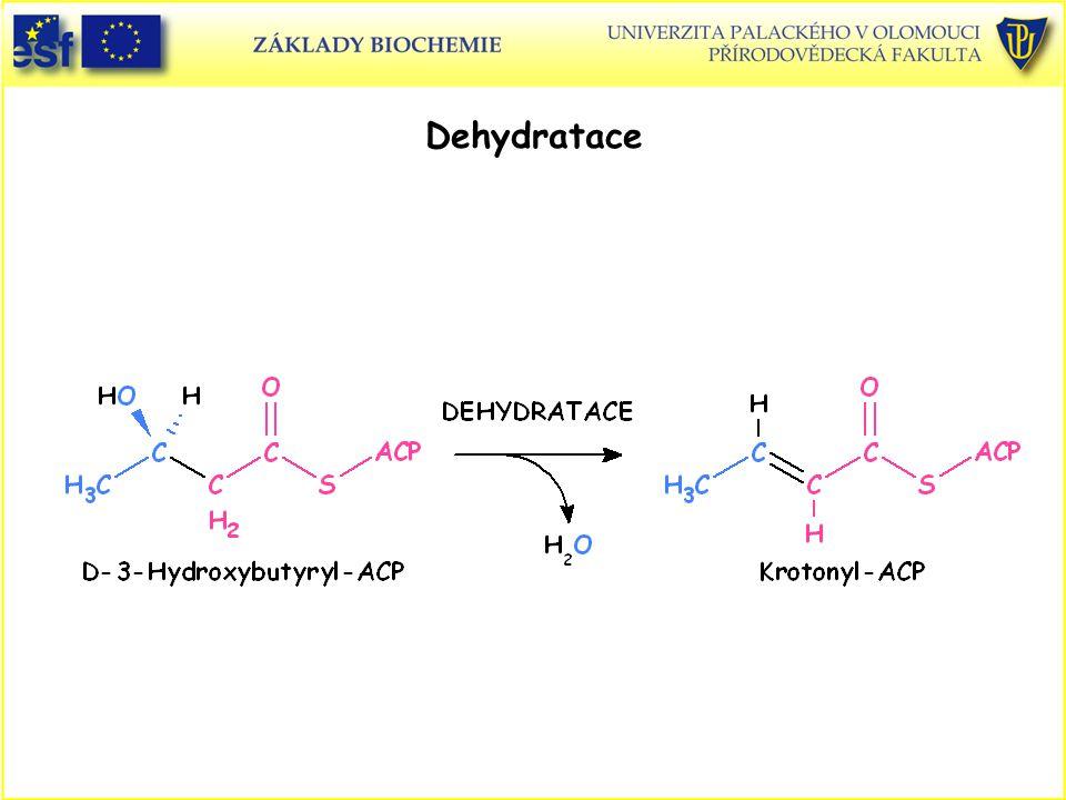 Dehydratace Syntéza mastných kyselin, dehydratace