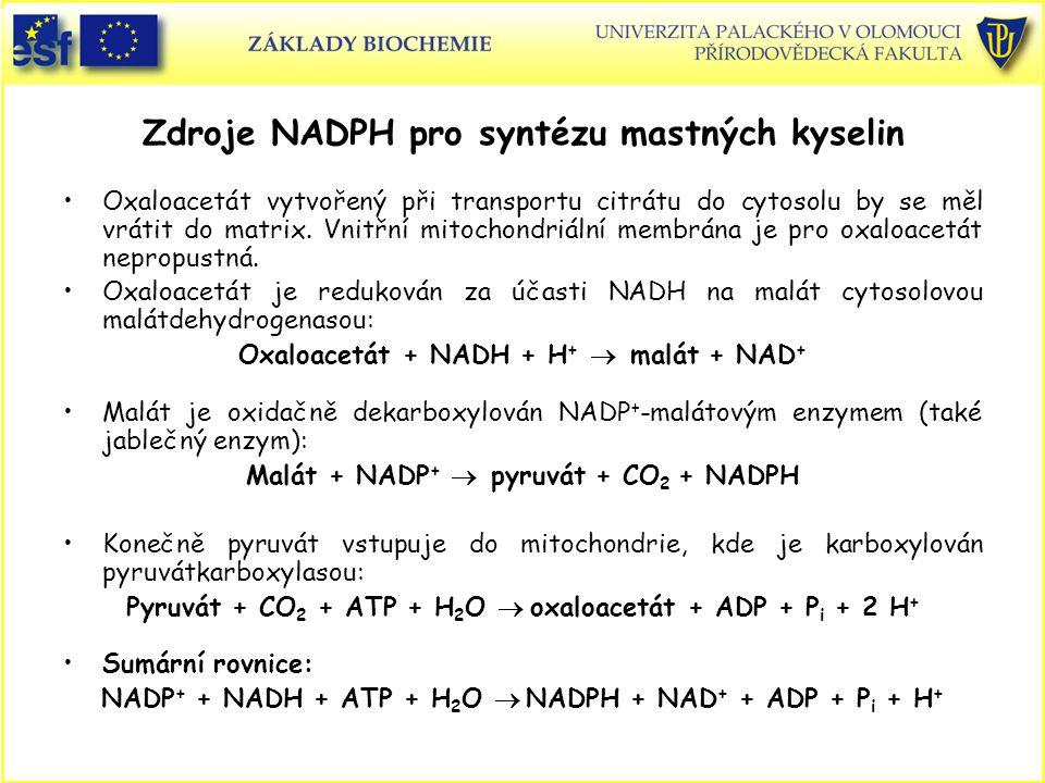 Zdroje NADPH pro syntézu mastných kyselin