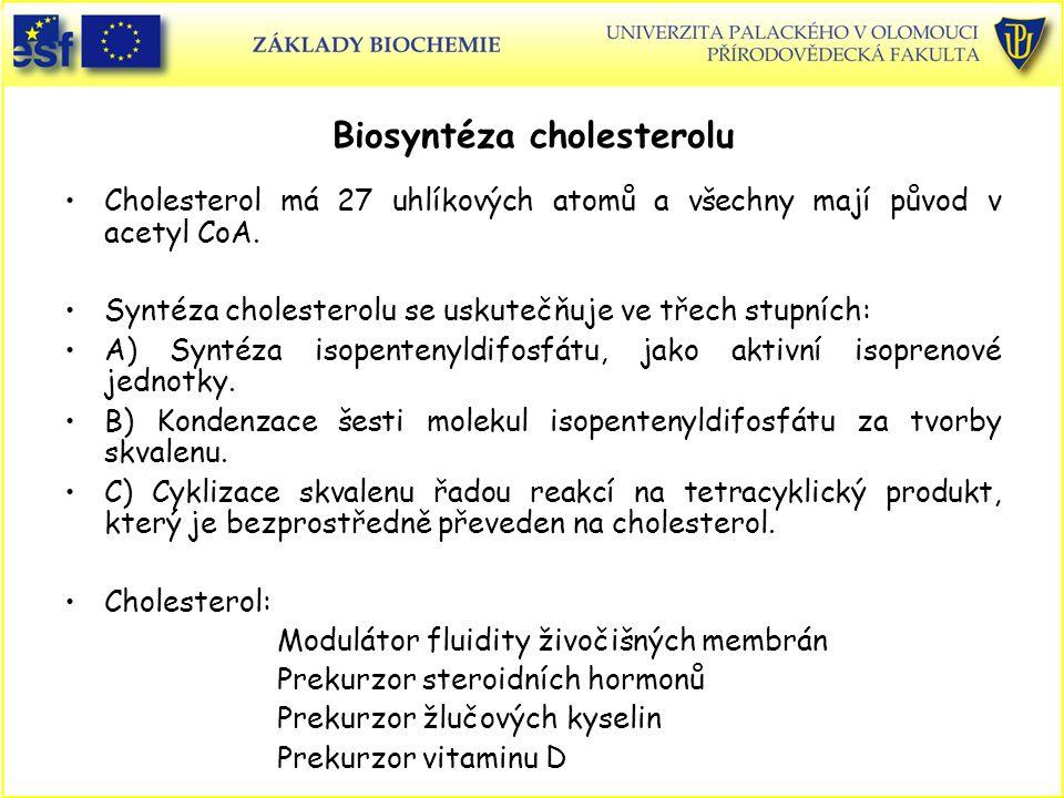 Biosyntéza cholesterolu