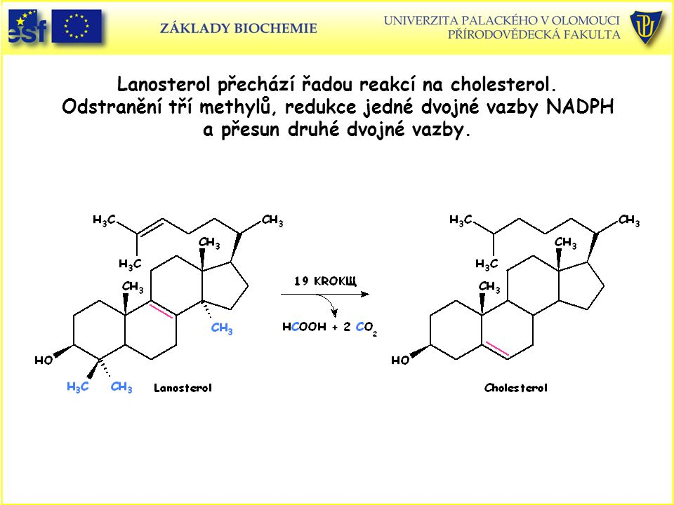 Lanosterol přechází řadou reakcí na cholesterol