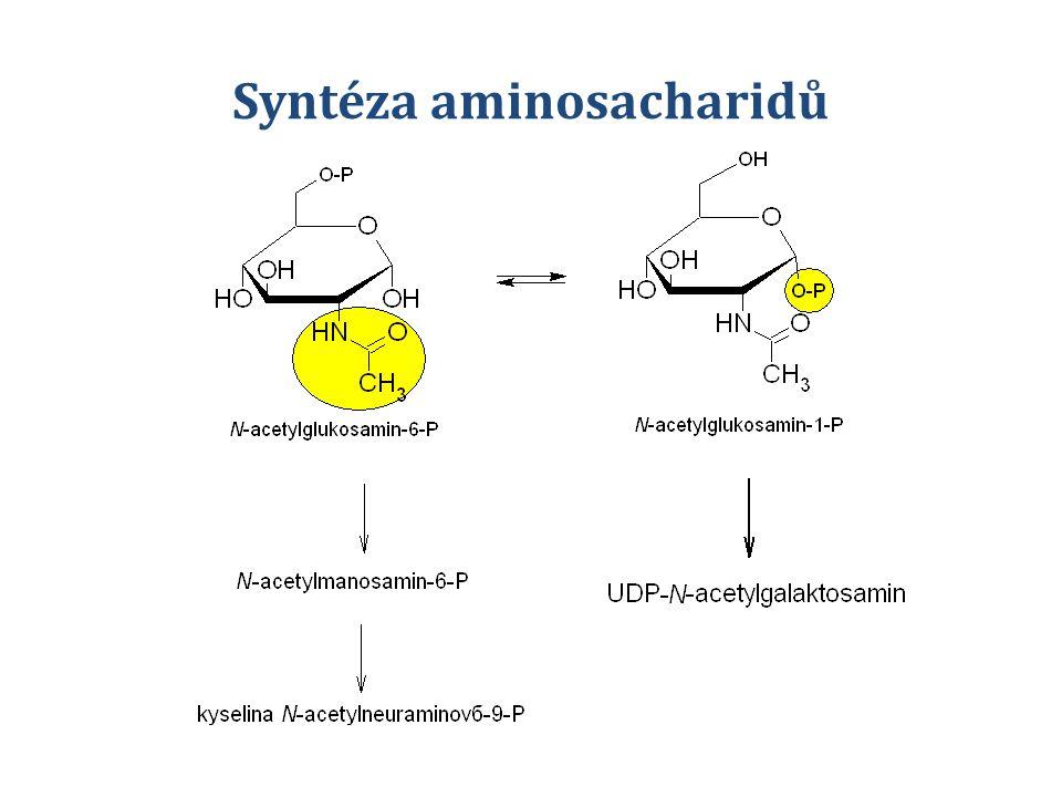 Syntéza aminosacharidů
