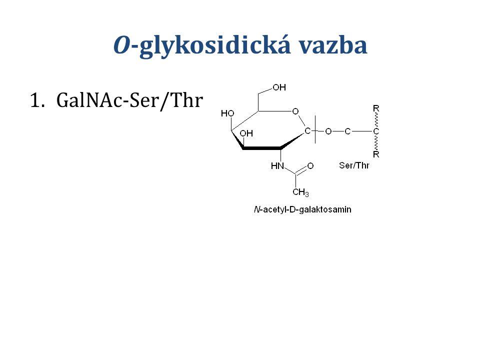 O-glykosidická vazba GalNAc-Ser/Thr