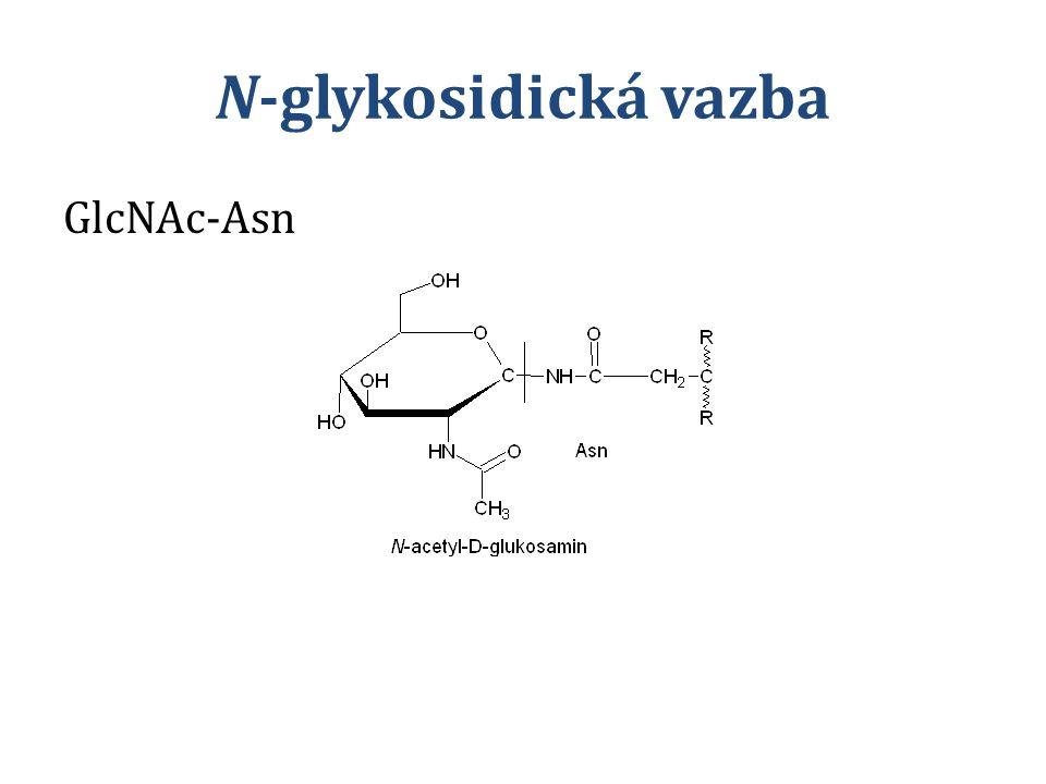 N-glykosidická vazba GlcNAc-Asn