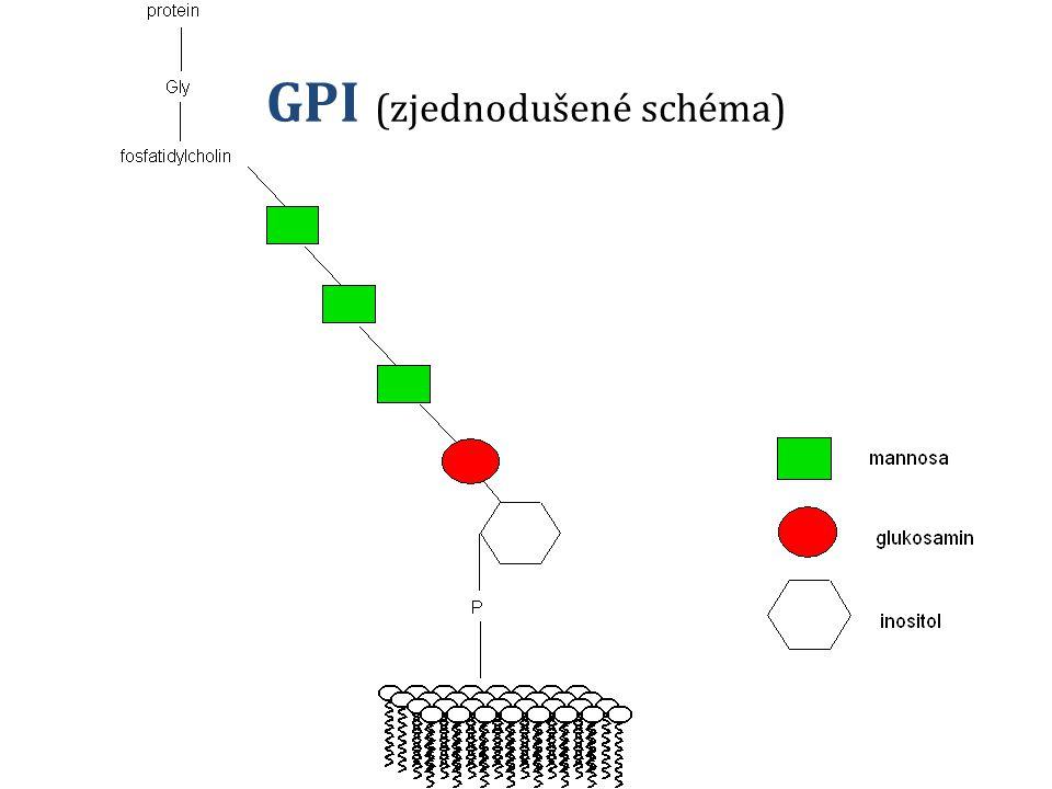 GPI (zjednodušené schéma)