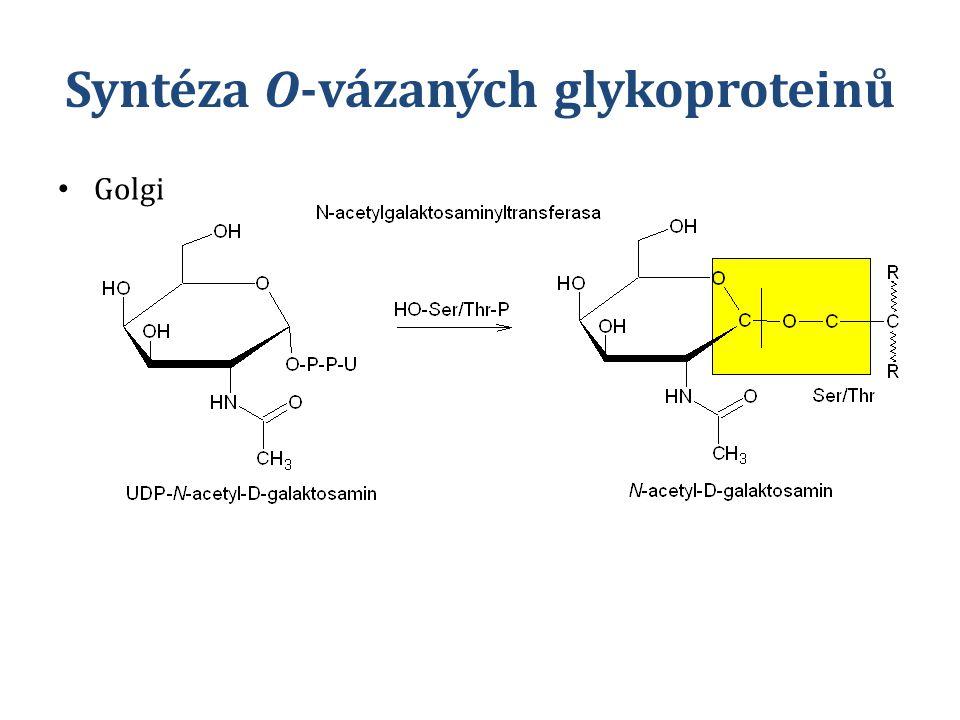 Syntéza O-vázaných glykoproteinů