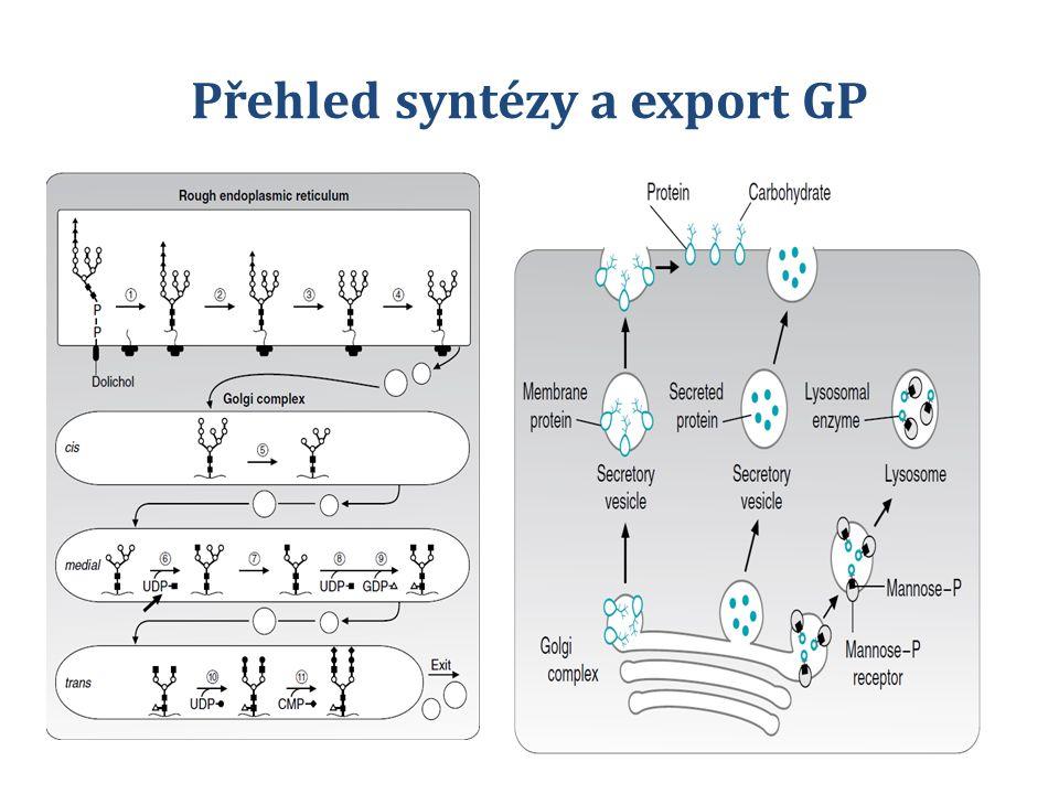 Přehled syntézy a export GP