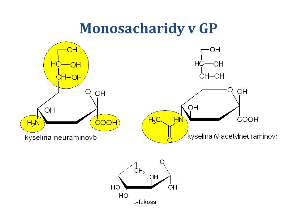 Monosacharidy v GP