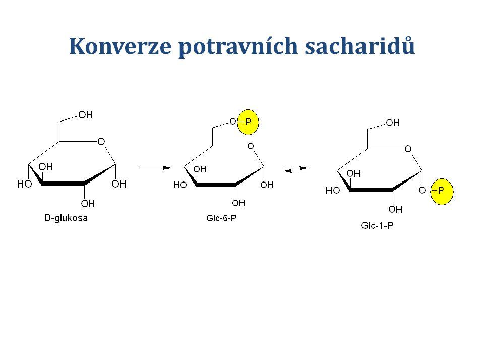 Konverze potravních sacharidů
