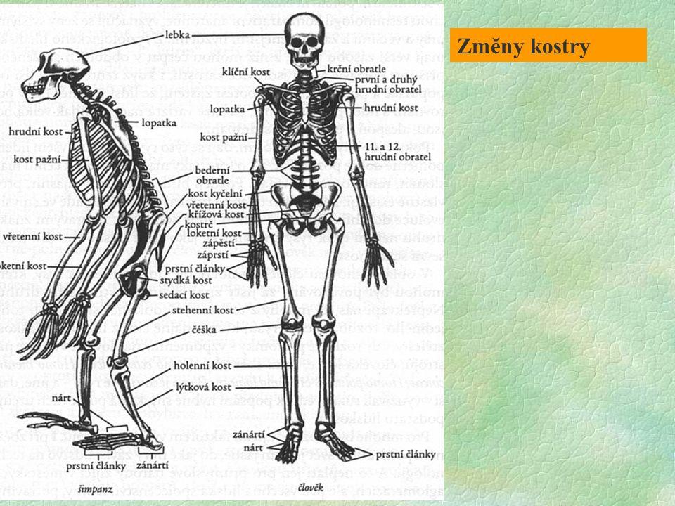 Změny kostry