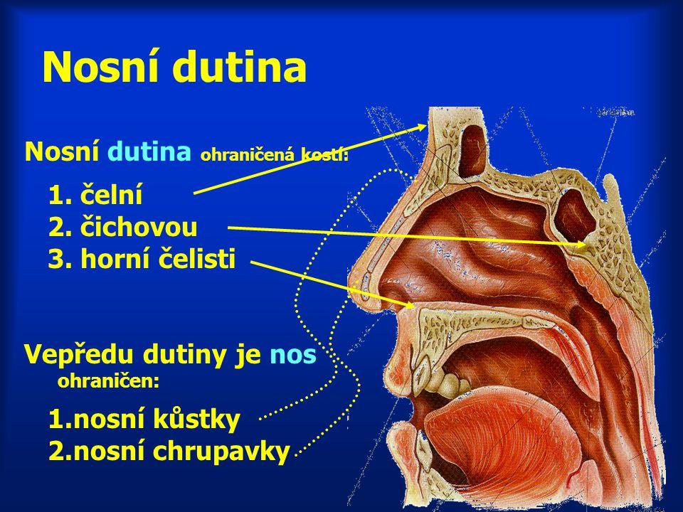 Nosní dutina Nosní dutina ohraničená kostí: 1. čelní 2. čichovou