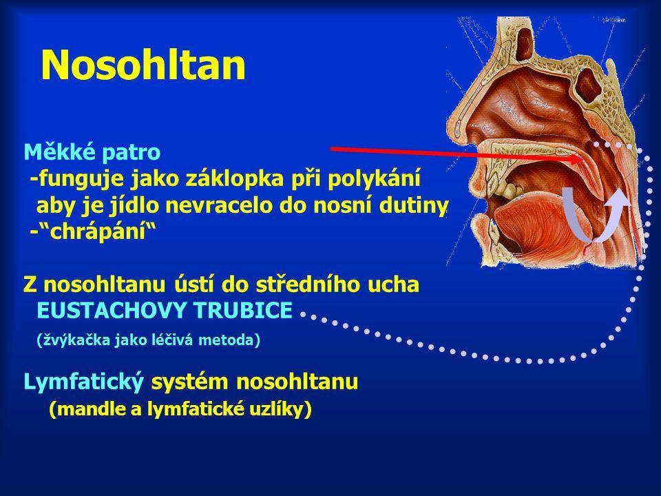 Nosohltan Měkké patro -funguje jako záklopka při polykání