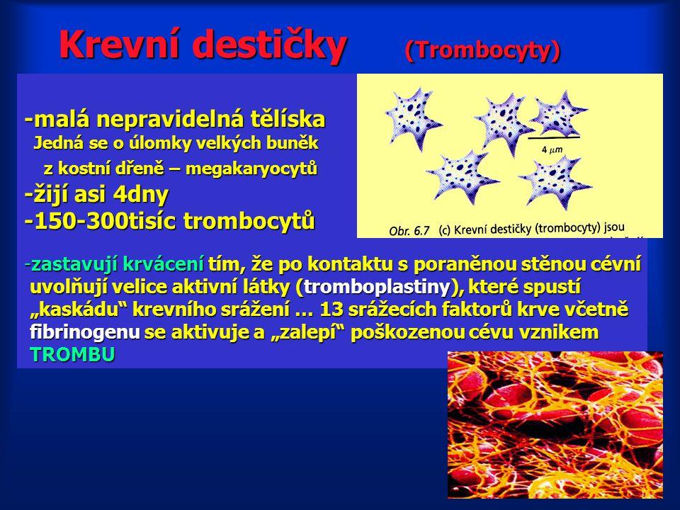 Krevní destičky (Trombocyty)