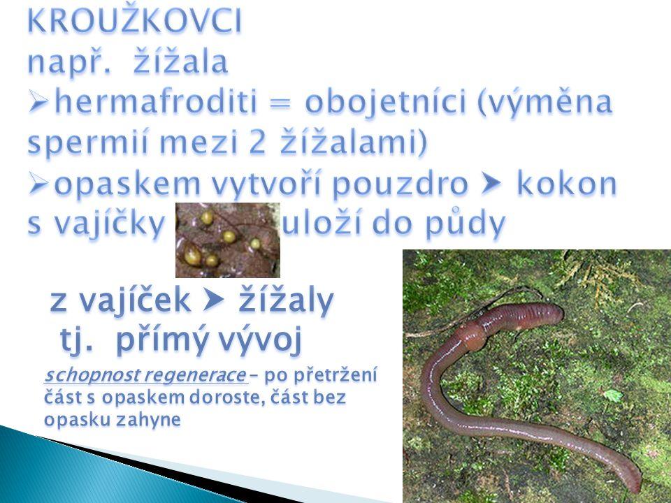 hermafroditi = obojetníci (výměna spermií mezi 2 žížalami)