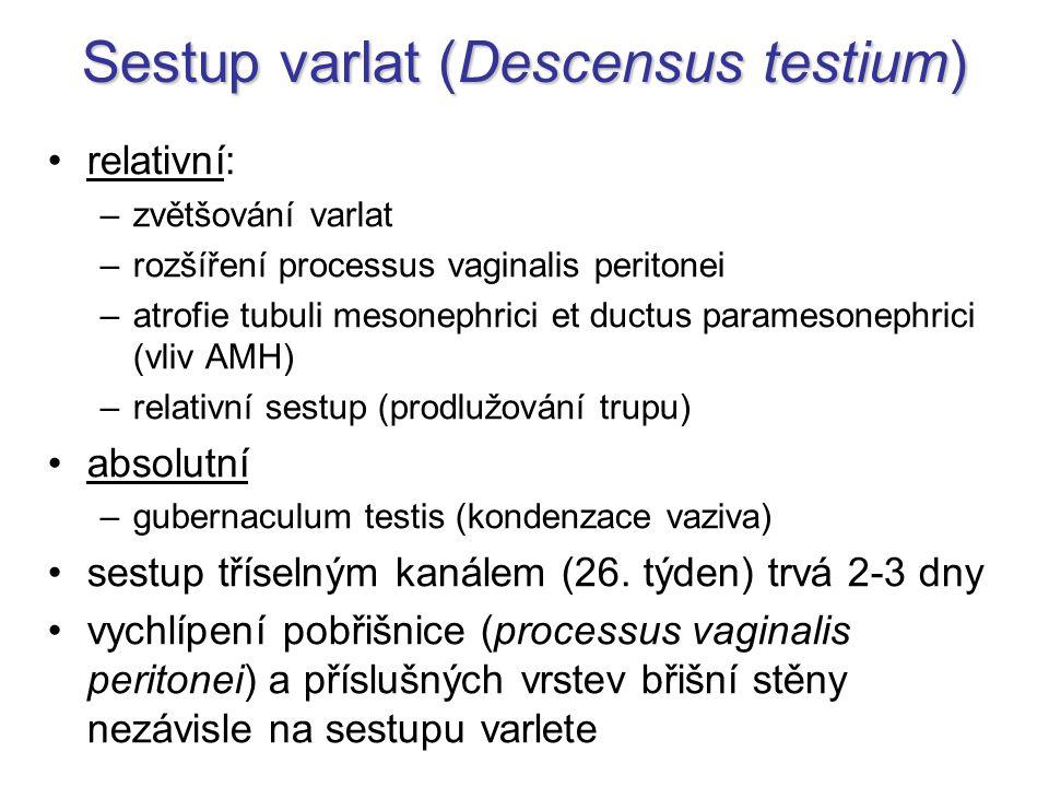 Sestup varlat (Descensus testium)