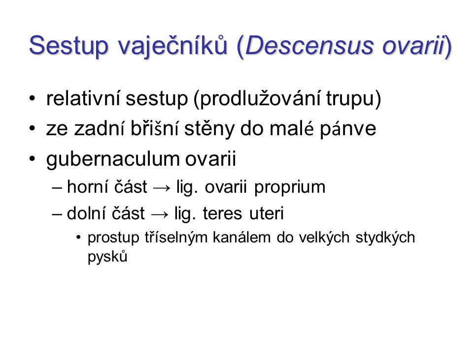 Sestup vaječníků (Descensus ovarii)
