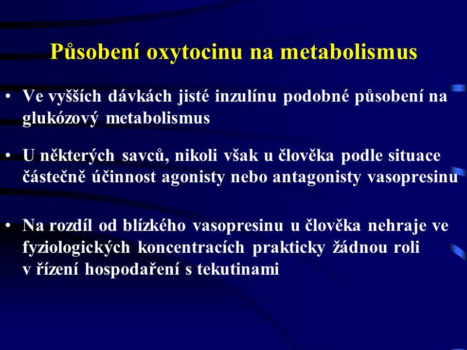 Působení oxytocinu na metabolismus